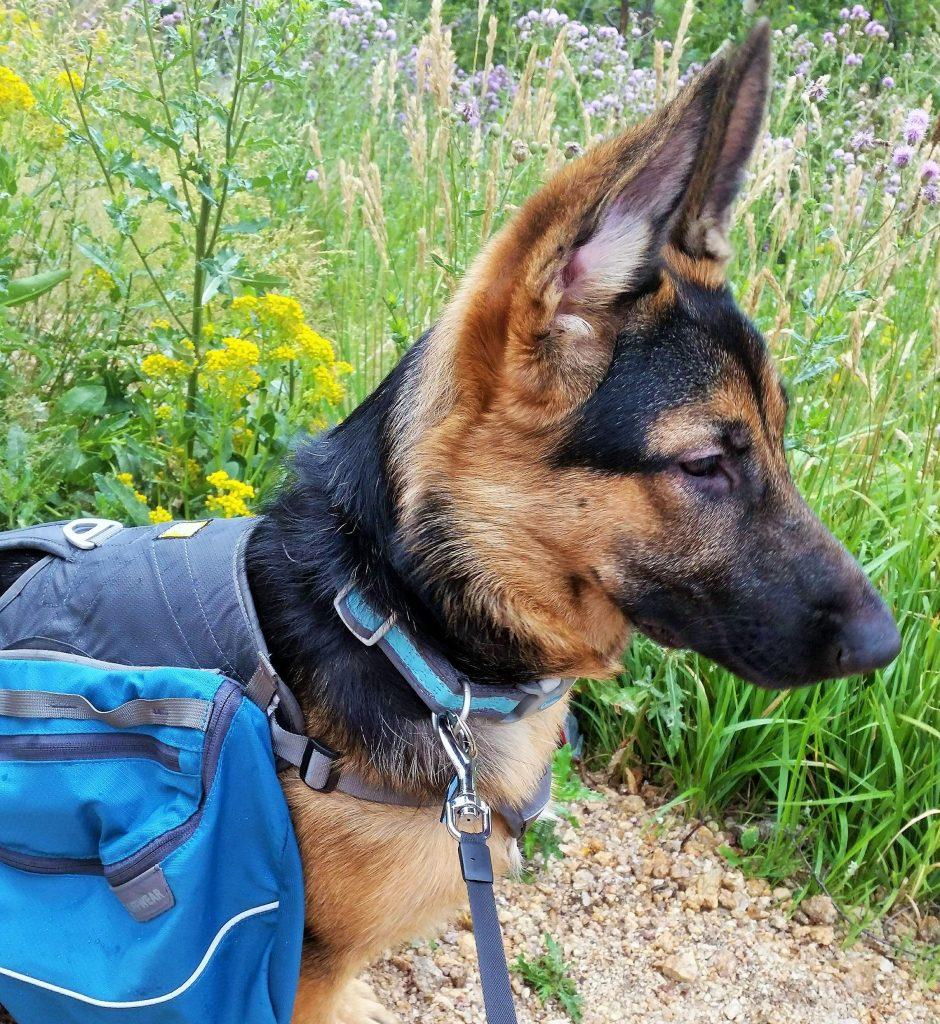 A nah hiking backpack 7-17 (2)