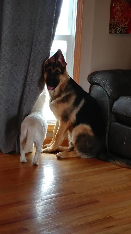 Koda with white doggy in window 10-2018