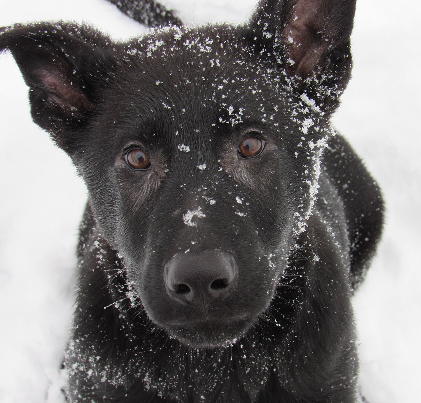 Luger-closeup-in-snow-12-4-18