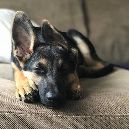 Murpy-puppypic-