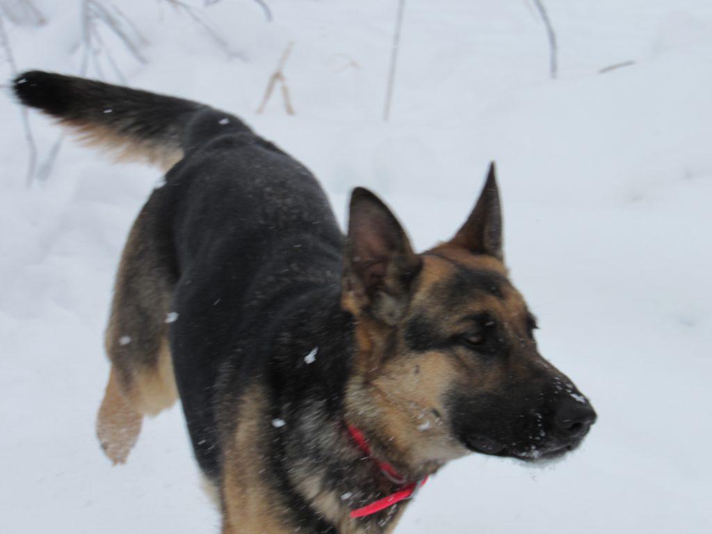 Tilda snow dance 12-4-18