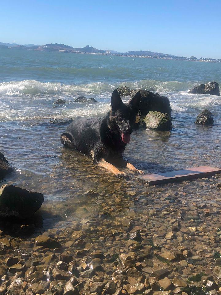 Gino in ocean 1-2019