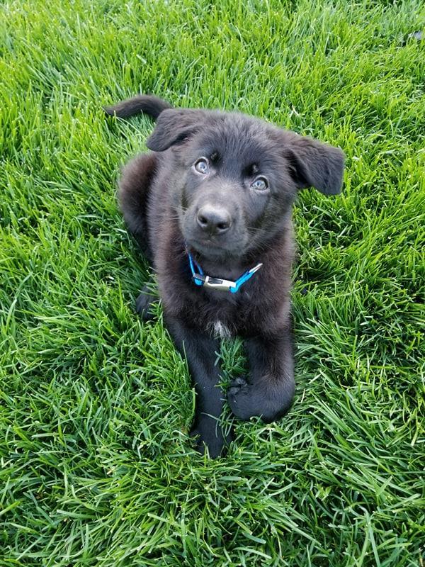 Titan in grass fbook