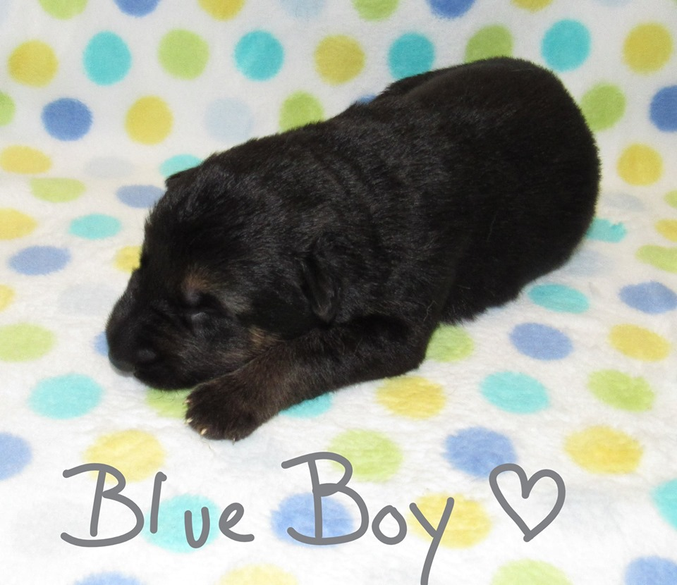 Blue Boy week 1 fbook 9-4-19