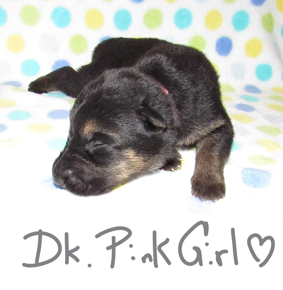 Dk Pink Girl week 1 fbook 9-4-19