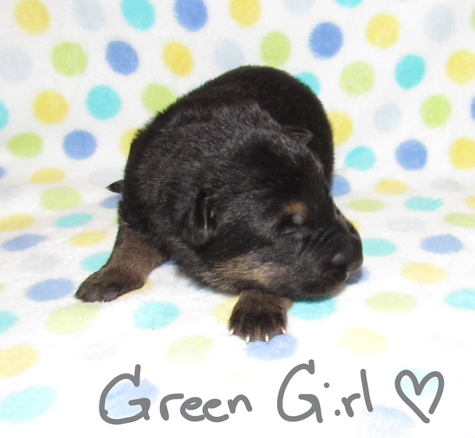 Green girl week 1 fbook 9-4-19