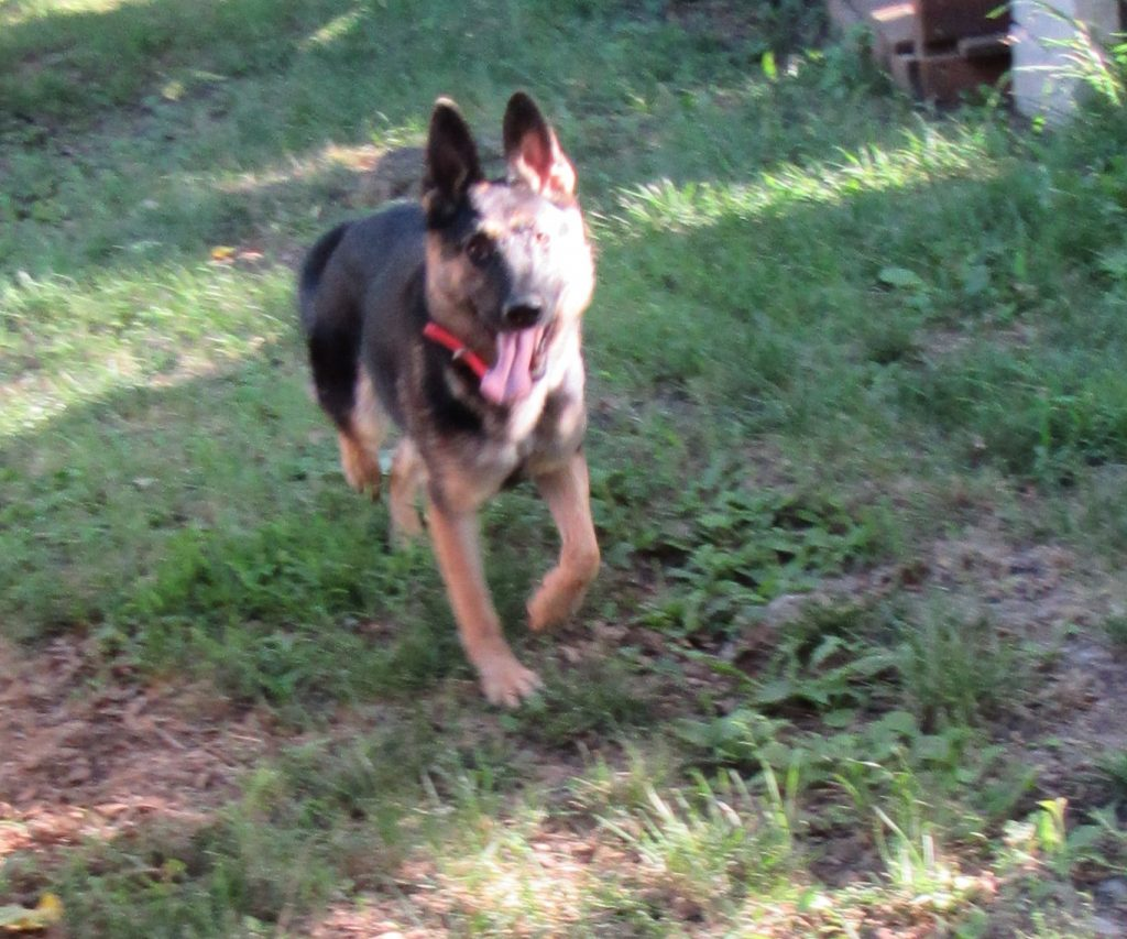 Gwen running in sunshine playhouse 8-27-19