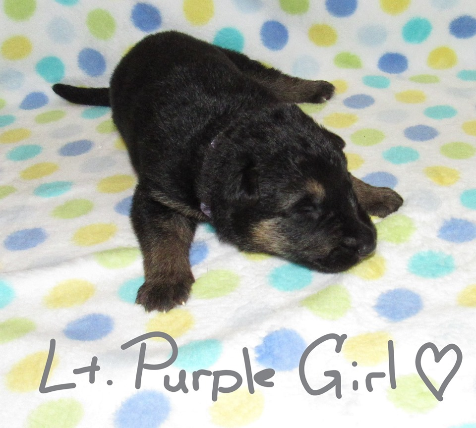 Lt Purple Girl week 1 fbook 9-4-19
