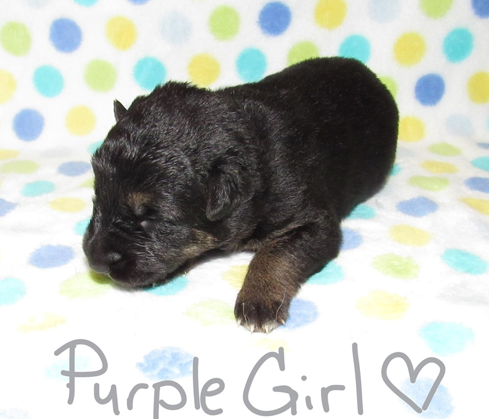 Purple Girl week 1 fbook 9-4-19