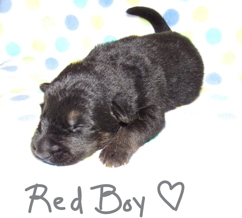 Red boy week 1 fbook 9-4-19