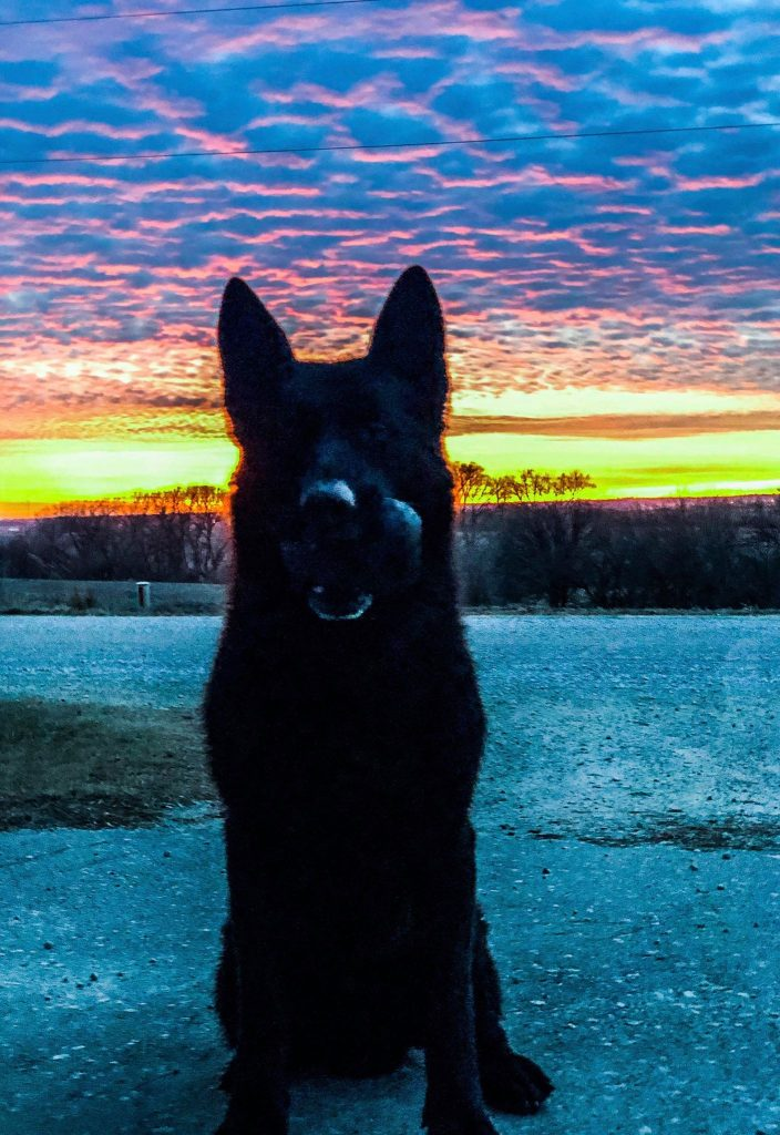 Tyson sunset photo