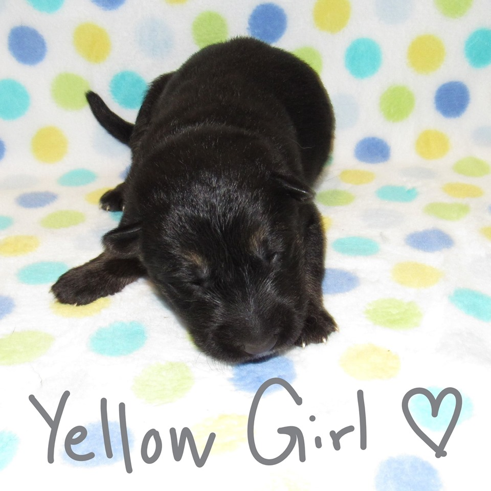 Yellow Girl week 1 fbook 9-4-19