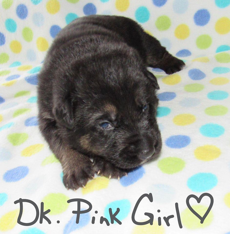 A DK PINK FBOOK