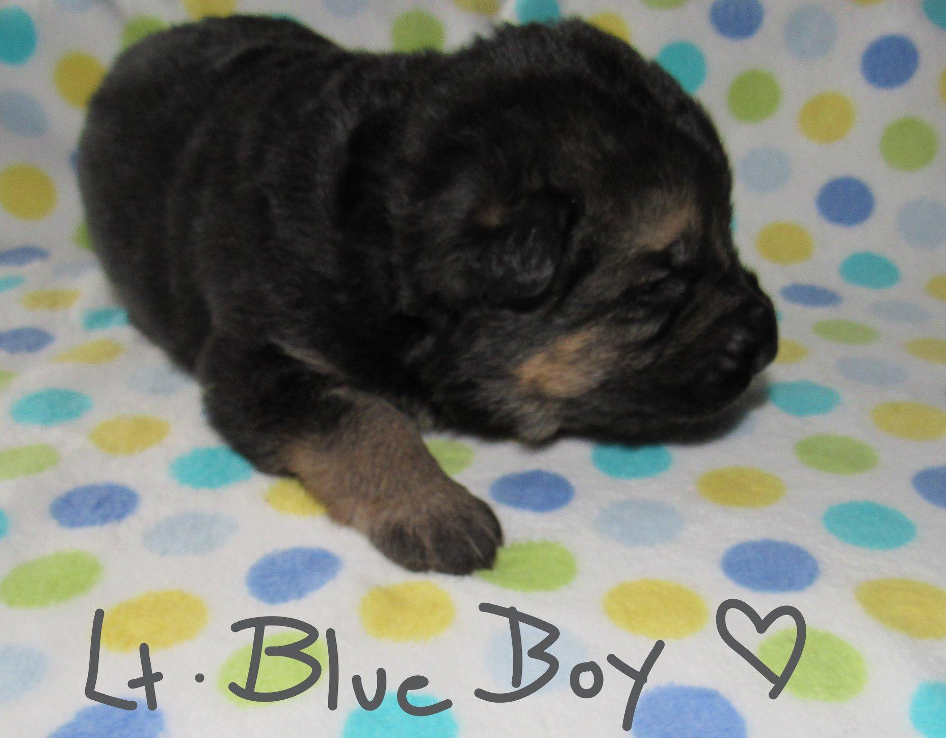 A LT BLUE FBOOK
